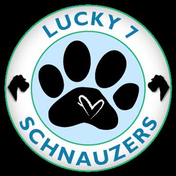 Lucky 7 Schnazuers